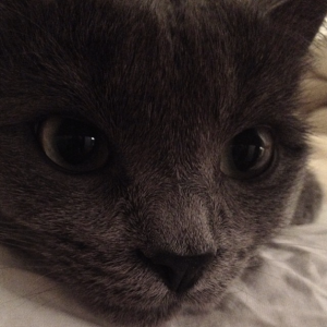 Grey kitty face